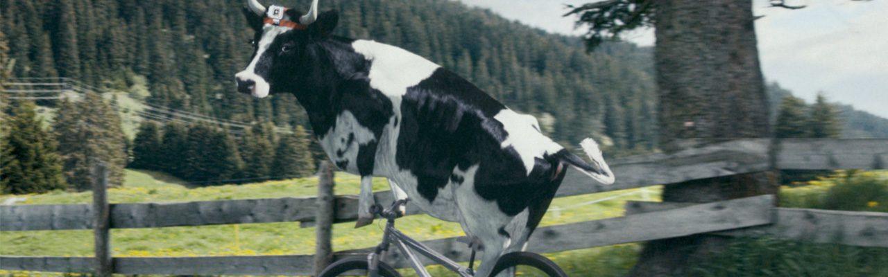 cowface33